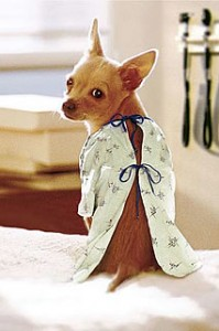 dog_hosp_gown