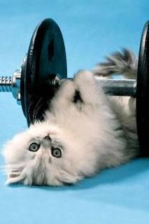 kitten lifting weights