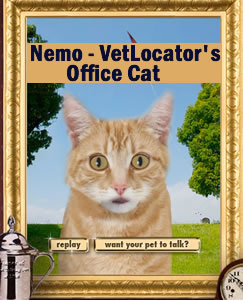 Nemo - VetLocator's office cat