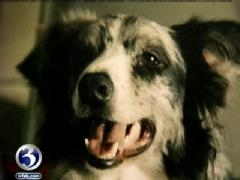 Dog dies during routine vet visit
