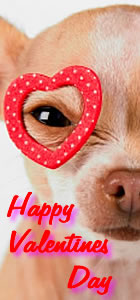 Happy Valentine's Day from VetLocator.com Daily Paws