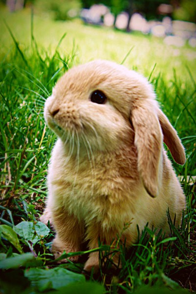 cute bunny archives   daily paws daily paws