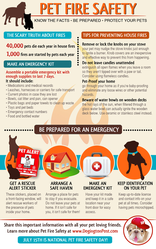 emergency dog care archives   daily paws daily paws