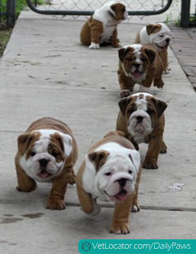A gaggle of bullies.