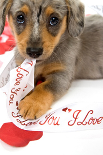 Valentines-day-pet-tips