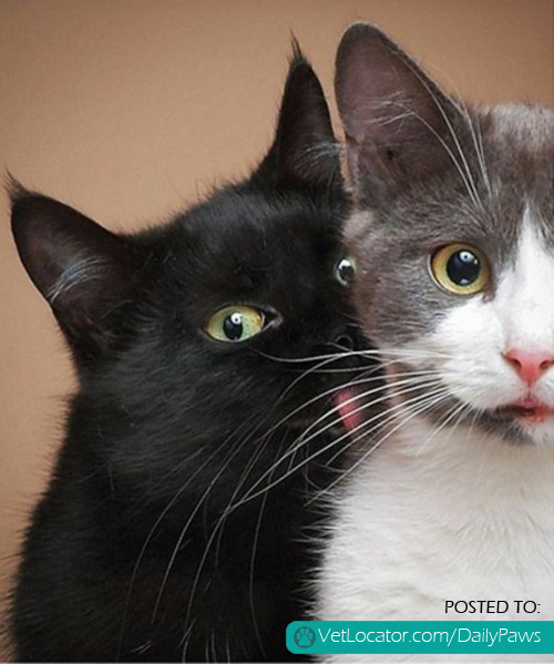 Awwww Cats