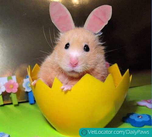 easter-animals-02