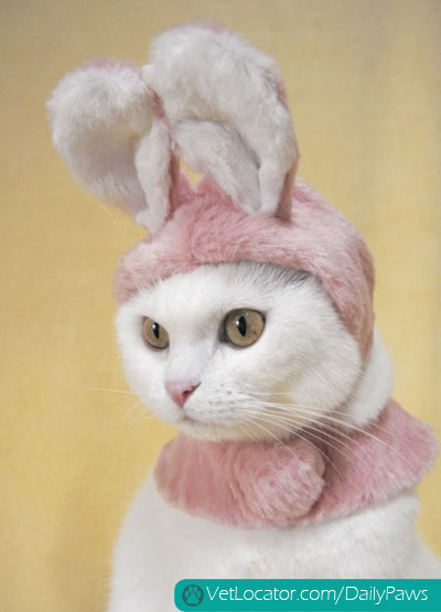 easter-animals-10