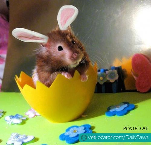 hamster bunny