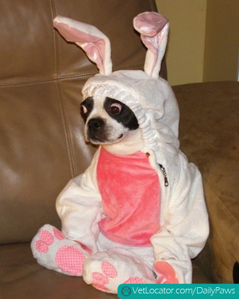 how-to-spot-an-easter-bunny-impersonator-01