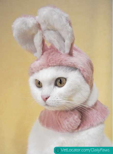how-to-spot-an-easter-bunny-impersonator-02