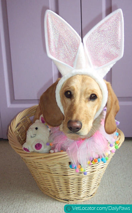 how-to-spot-an-easter-bunny-impersonator-03