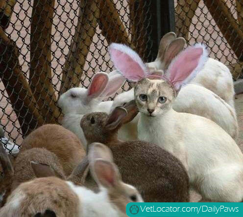 how-to-spot-an-easter-bunny-impersonator-07