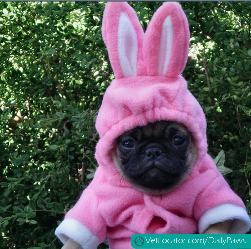how-to-spot-an-easter-bunny-impersonator-11