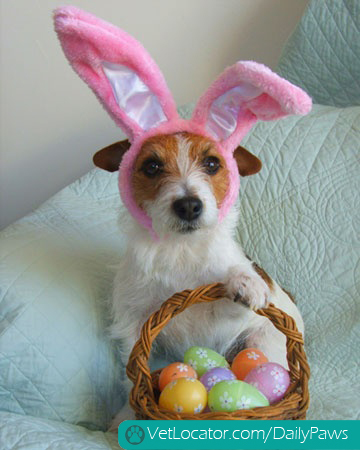 how-to-spot-an-easter-bunny-impersonator-12