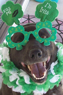 st-patricks-day-pet-safety-tips