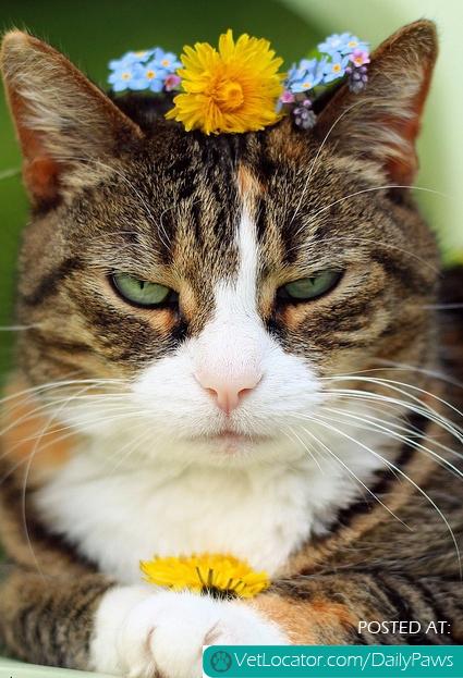 Boho Kitty.