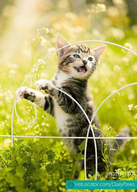 Spring Time Kitty
