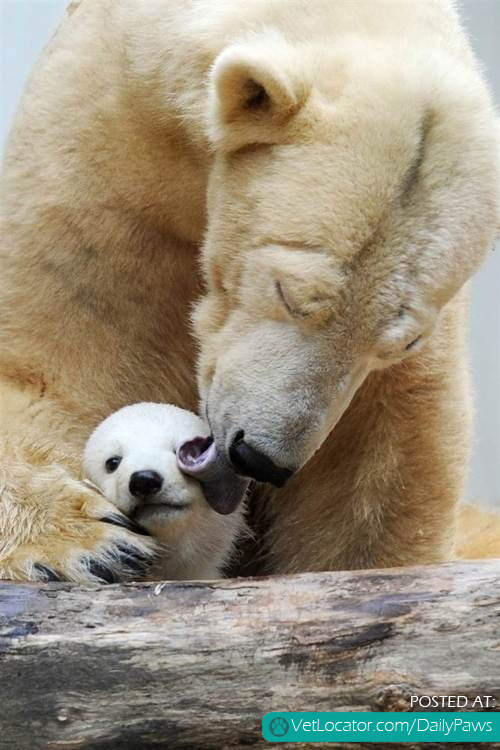 a mother's devotion.