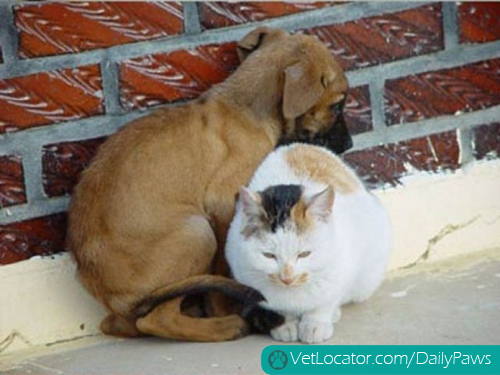 dog-cat-love-03