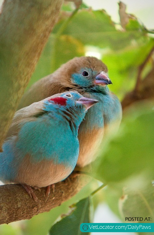 sweet bird love