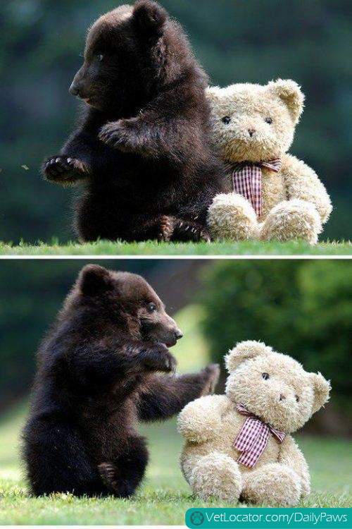 teddy & bear
