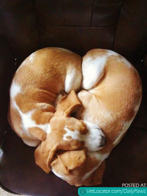 Heart shaped puppies