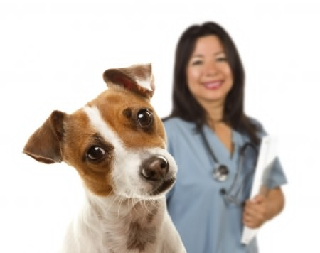 We want to know about your pet's vet