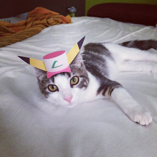 three-legged-kitty-wears-tiny-paper-hats-01
