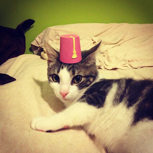 three-legged-kitty-wears-tiny-paper-hats-02