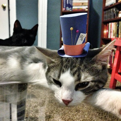 three-legged-kitty-wears-tiny-paper-hats-03