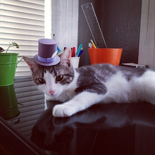 three-legged-kitty-wears-tiny-paper-hats-04