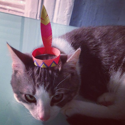 three-legged-kitty-wears-tiny-paper-hats-05