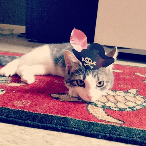 three-legged-kitty-wears-tiny-paper-hats-06