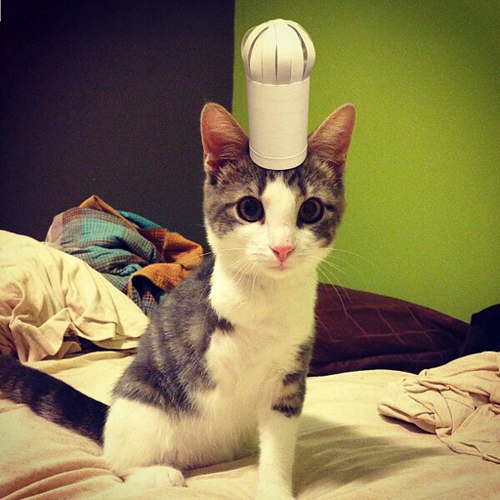 three-legged-kitty-wears-tiny-paper-hats-07