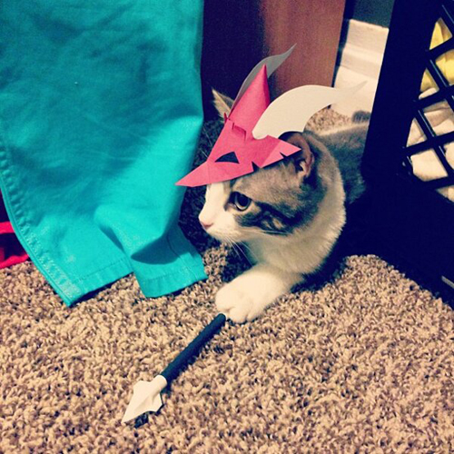 three-legged-kitty-wears-tiny-paper-hats-08