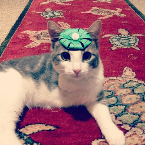 three-legged-kitty-wears-tiny-paper-hats-09