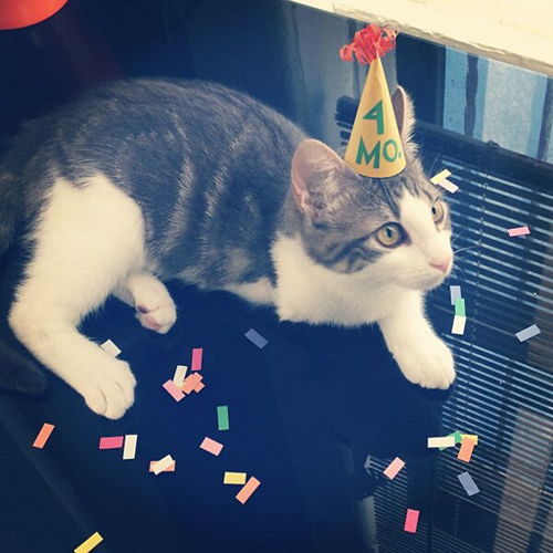 three-legged-kitty-wears-tiny-paper-hats-10