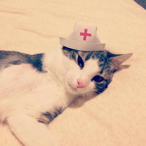 three-legged-kitty-wears-tiny-paper-hats-11