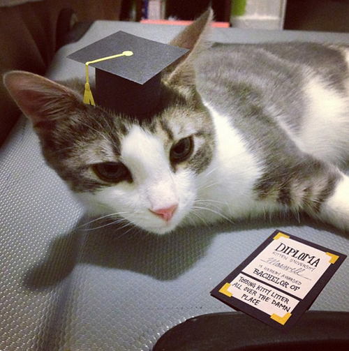 three-legged-kitty-wears-tiny-paper-hats-12