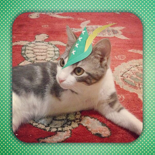 three-legged-kitty-wears-tiny-paper-hats-13