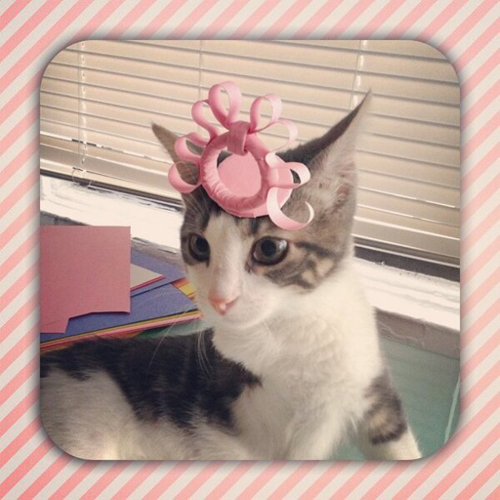 three-legged-kitty-wears-tiny-paper-hats-14