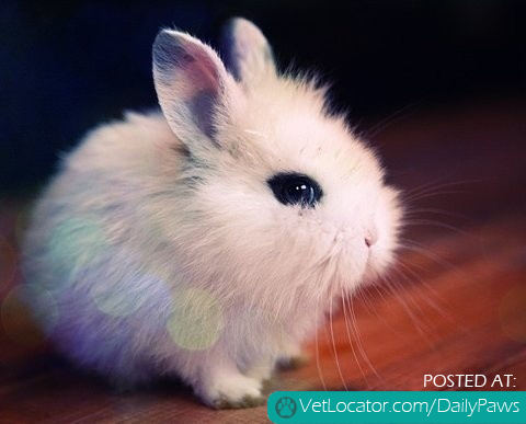 Adorably Cute Bunny