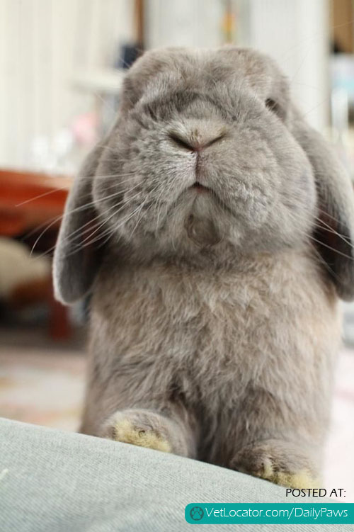 aodorable bunny