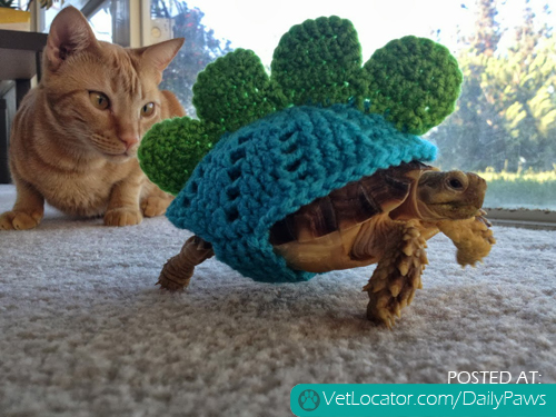 cat and jurassic tortoise