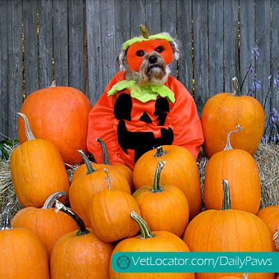 halloween-pet-parade-05