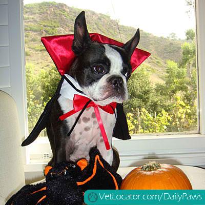 halloween-pet-parade-07