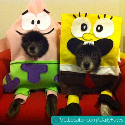 halloween-pet-parade-11