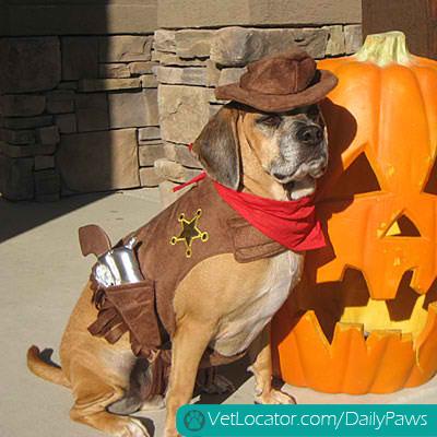 halloween-pet-parade-13