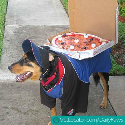 halloween-pet-parade-14